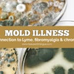 Mold illness and its connection to Lyme, fibromyalgia and chronic fatigue