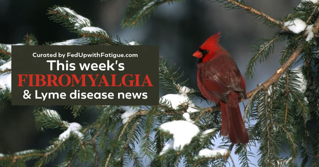 "The photo has a red cardinal sitting on a tree branch with hints of snow on the greenery. The words ""This week's fibromyalgia and Lyme news"" appear as a text overlay on the photo."