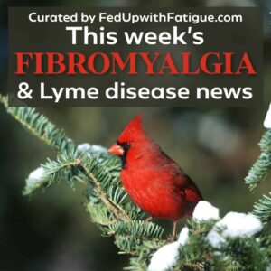 "The photo has a red cardinal sitting on an evergreen branch with touches of snow. The words ""This week's fibromyalgia and Lyme news"" appear as a text overlay over the image."