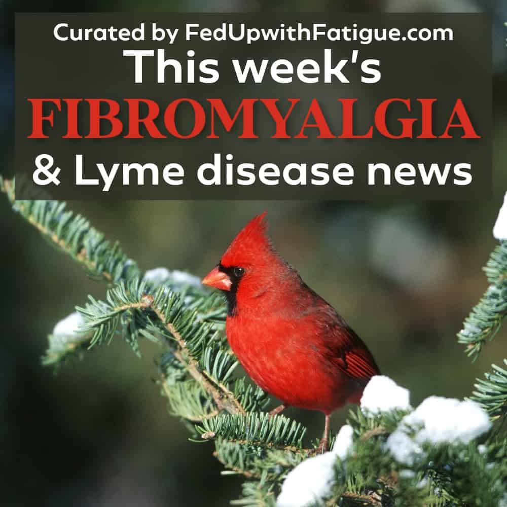 "A red cardinal sitting on a tree branch with snow. The words ""This week's fibromyalgia and Lyme news"" appear as an overlay on the photo."