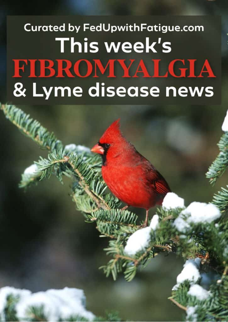 "The photo has a red cardinal sitting on an evergreen tree branch that's dotted with snow. The words ""This week's fibromyalgia and Lyme news"" appear as a text overlay on the photo."